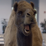 Guess what day it is? Hump Day!